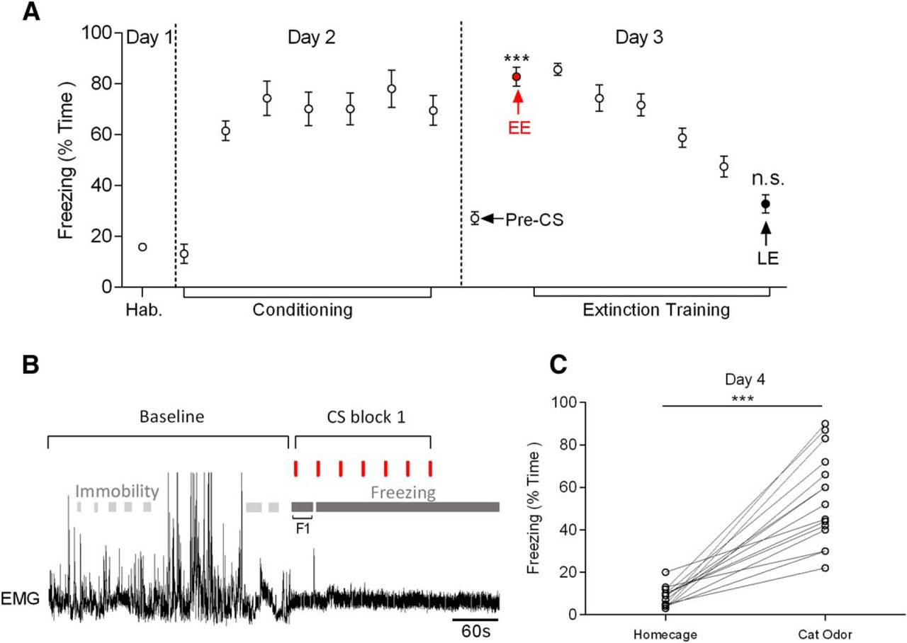 Neural Correlates of Fear in the Periaqueductal Gray