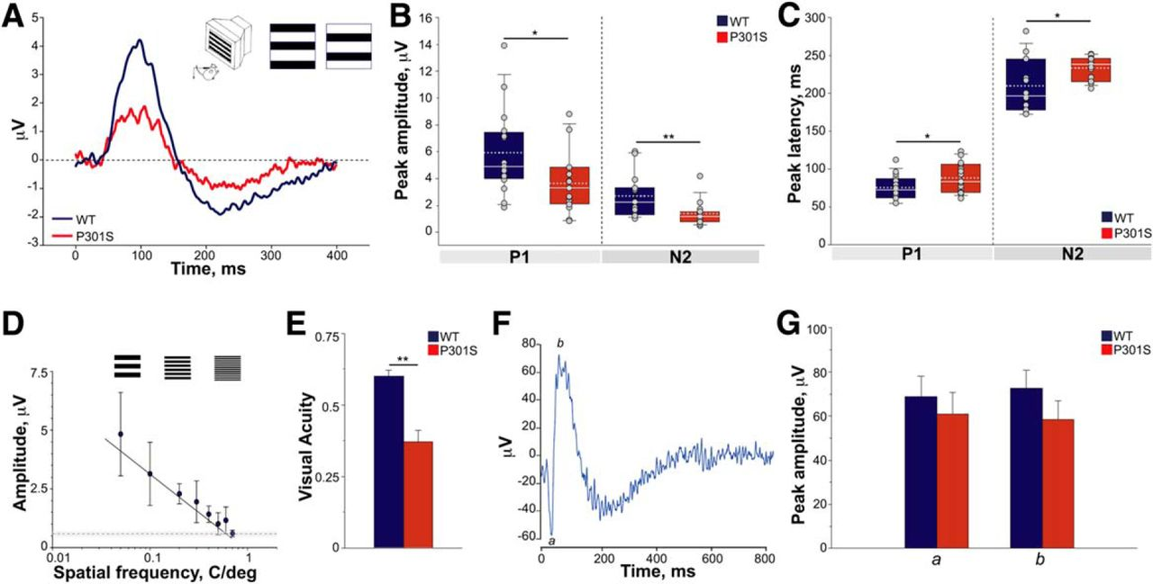 Tau-Driven Neuronal and Neurotrophic Dysfunction in a Mouse Model of ...
