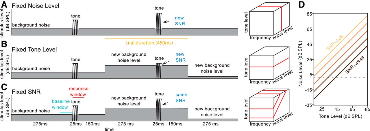 Effects of Signal-to-Noise Ratio on Auditory Cortical