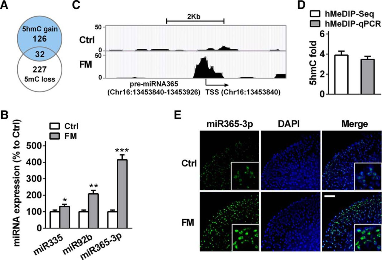 Hydroxymethylation of microRNA-365-3p Regulates Nociceptive