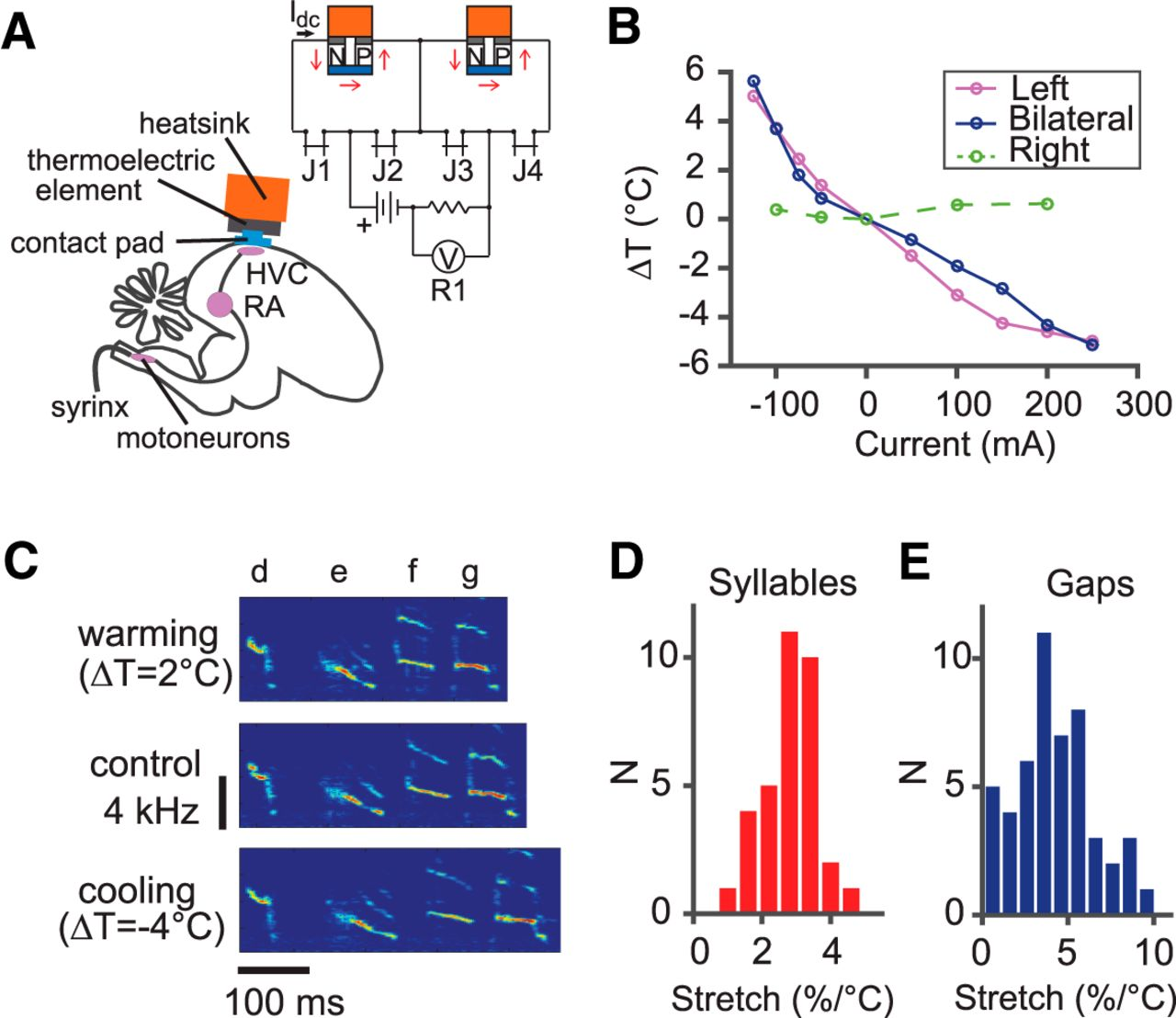 Temperature Manipulation In Songbird Brain Implicates The Premotor Electrical Circuit Showing Current Flow By Pmb 300 Ad Diagram Download Figure