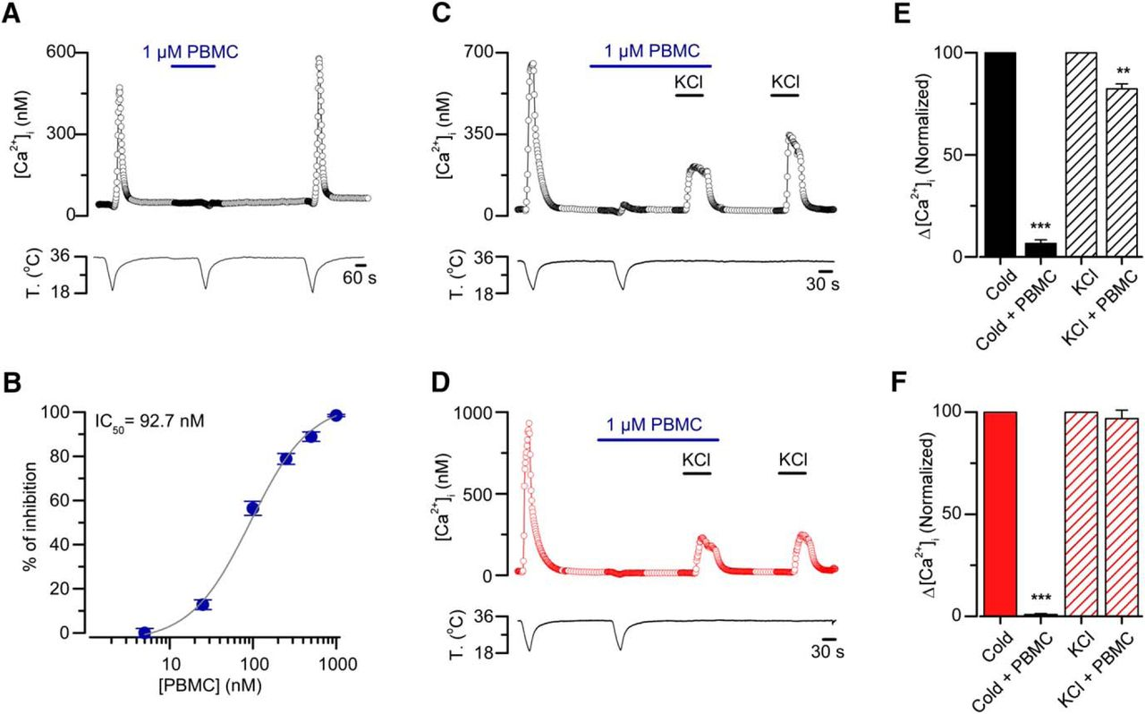Role of the excitability brake potassium current ikd in cold download figure ccuart Choice Image