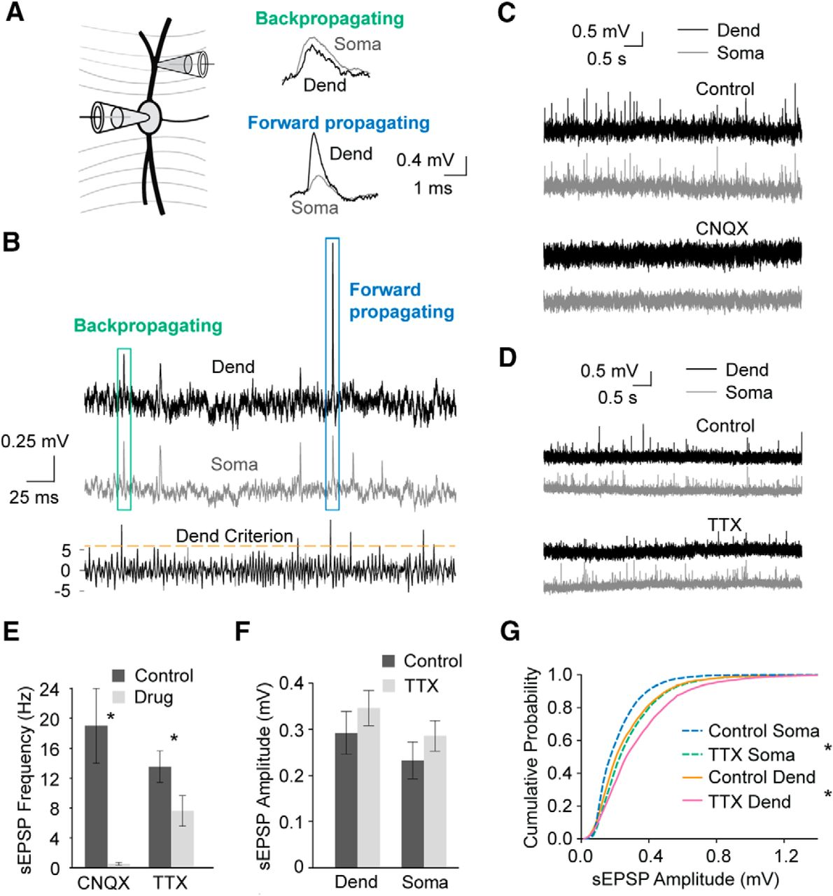 Amplitude normalization of dendritic epsps at the soma of binaural download figure ccuart Choice Image