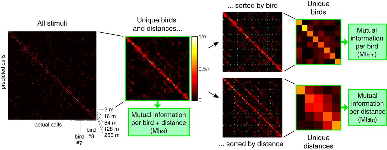 Single Neurons in the Avian Auditory Cortex Encode