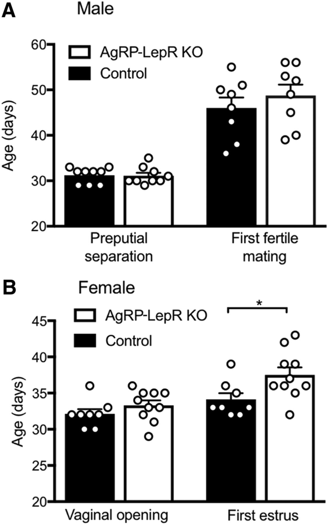 Leptin Signaling in AgRP Neurons Modulates Puberty Onset and