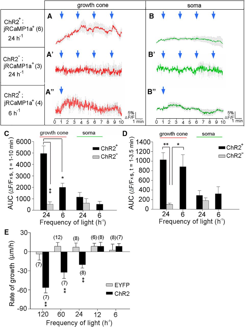 k channel kv3 4 is essential for axon growth by limiting the influx