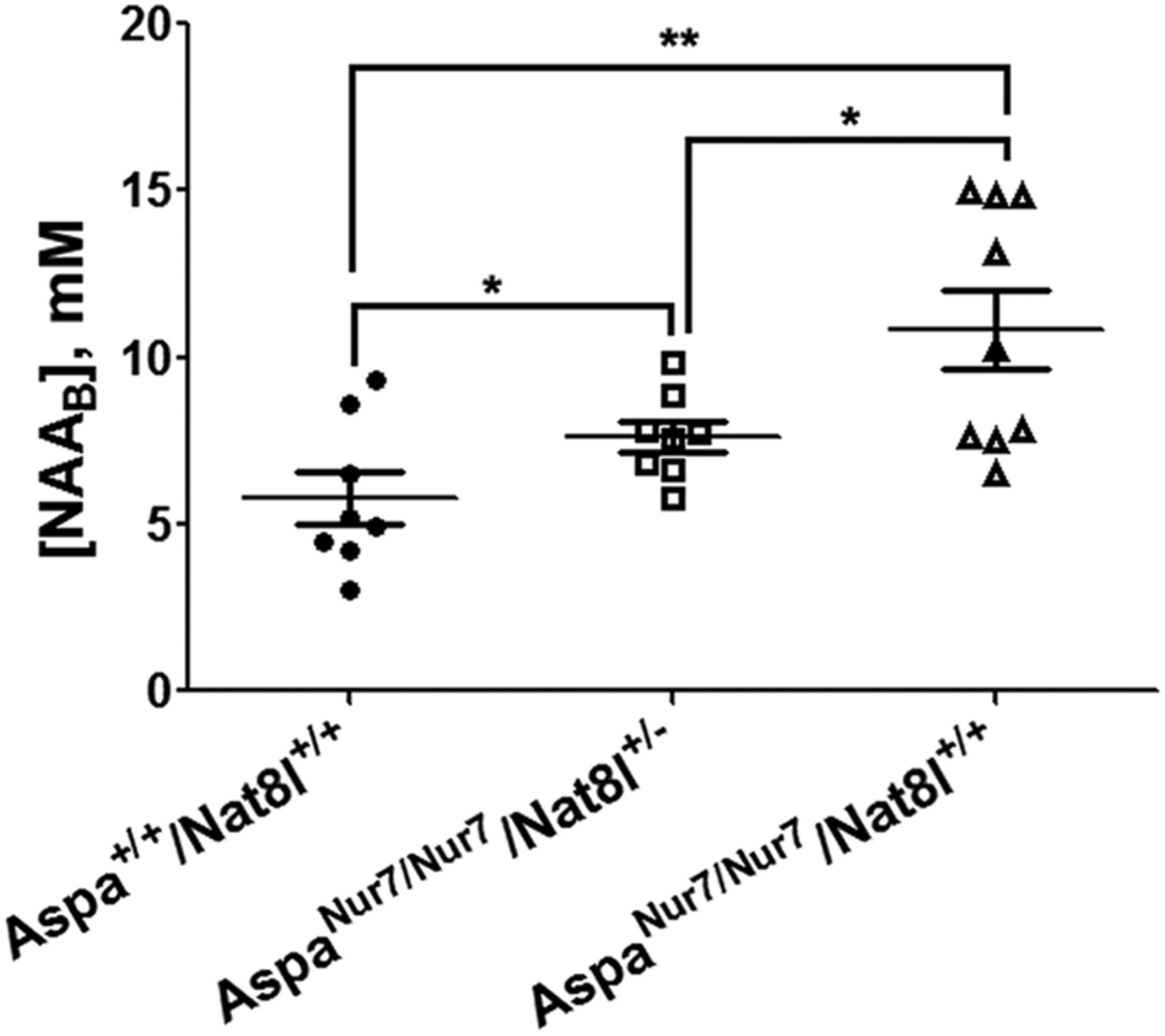 Suppressing n acetyl l aspartate synthesis prevents loss of download figure biocorpaavc Gallery