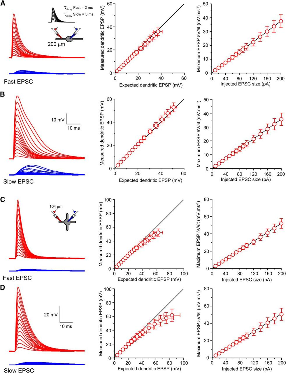 Variable action potential backpropagation during tonic firing and download figure nvjuhfo Image collections