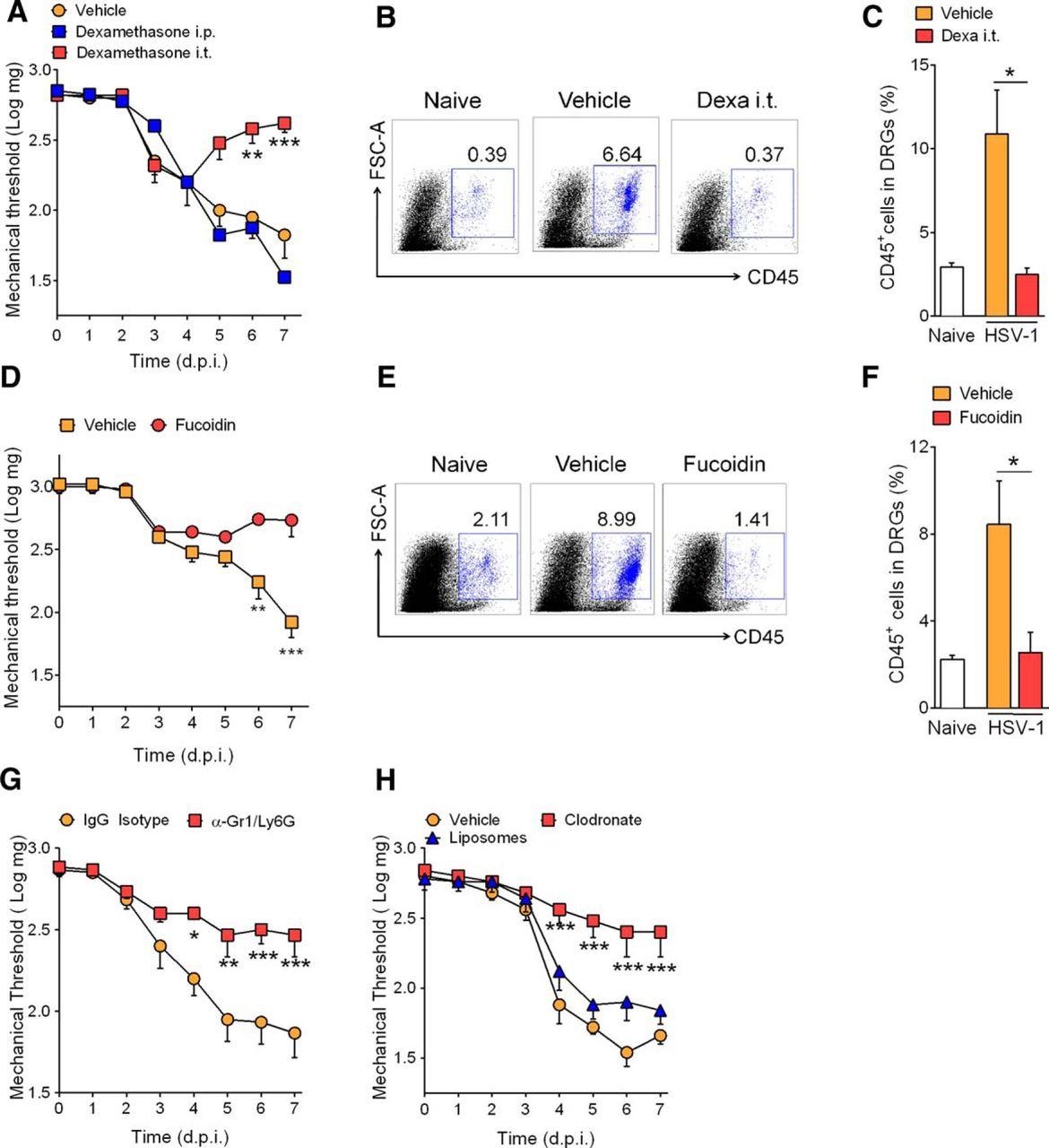Neuroimmune–Glia Interactions in the Sensory Ganglia Account