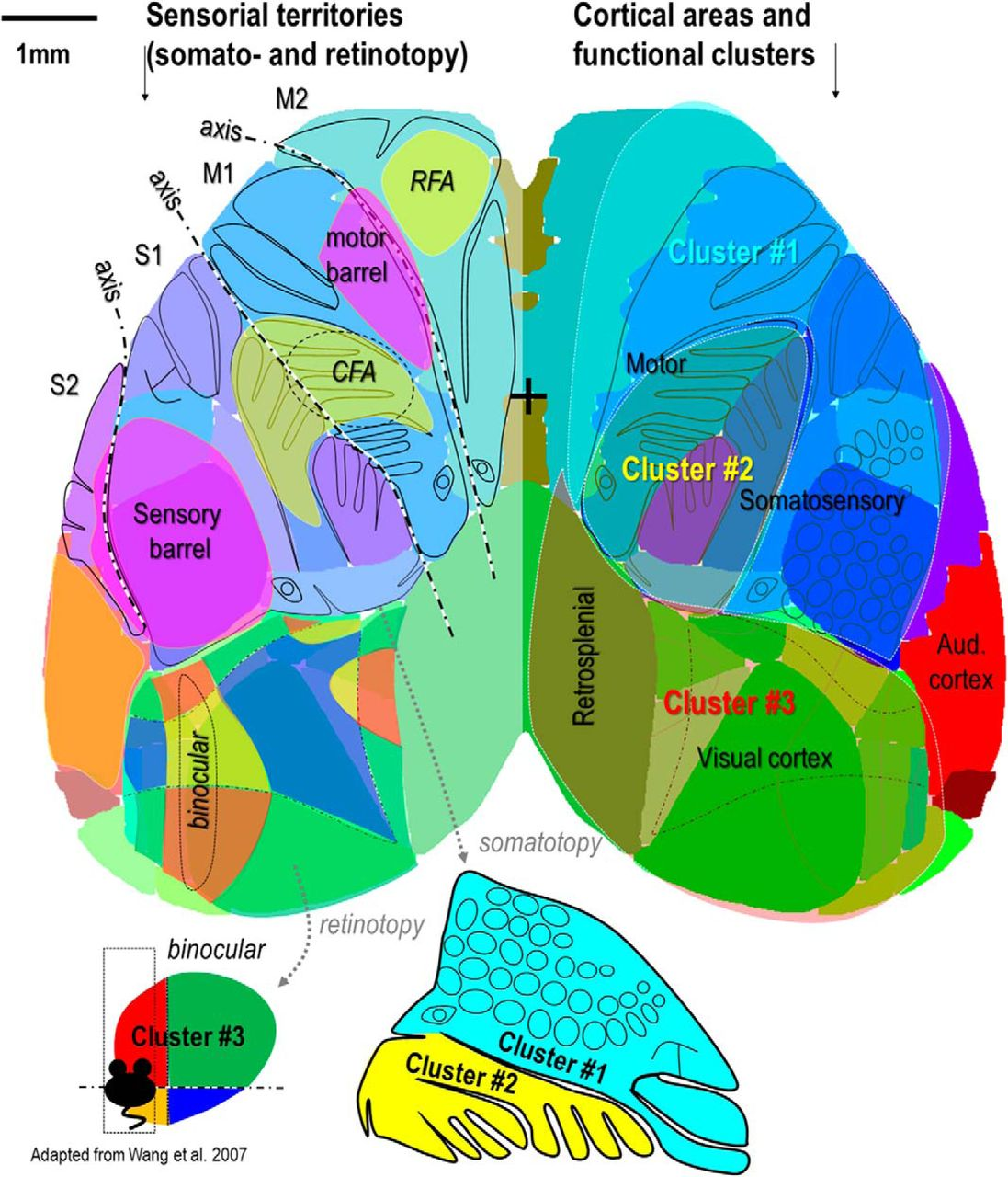Mesoscale Mapping of Mouse Cortex Reveals Frequency
