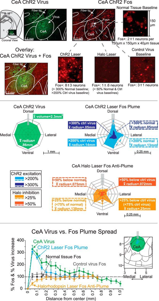 Optogenetic Central Amygdala Stimulation Intensifies And Narrows Electric Circuit Board Mri Baler Download Figure