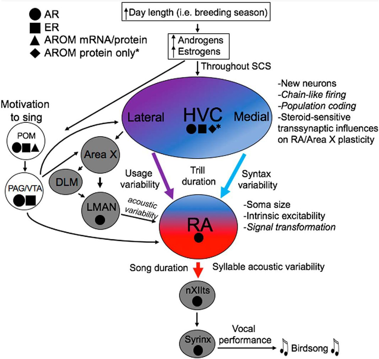 Dissociable Effects on Birdsong of Androgen Signaling in Cortex-Like ...