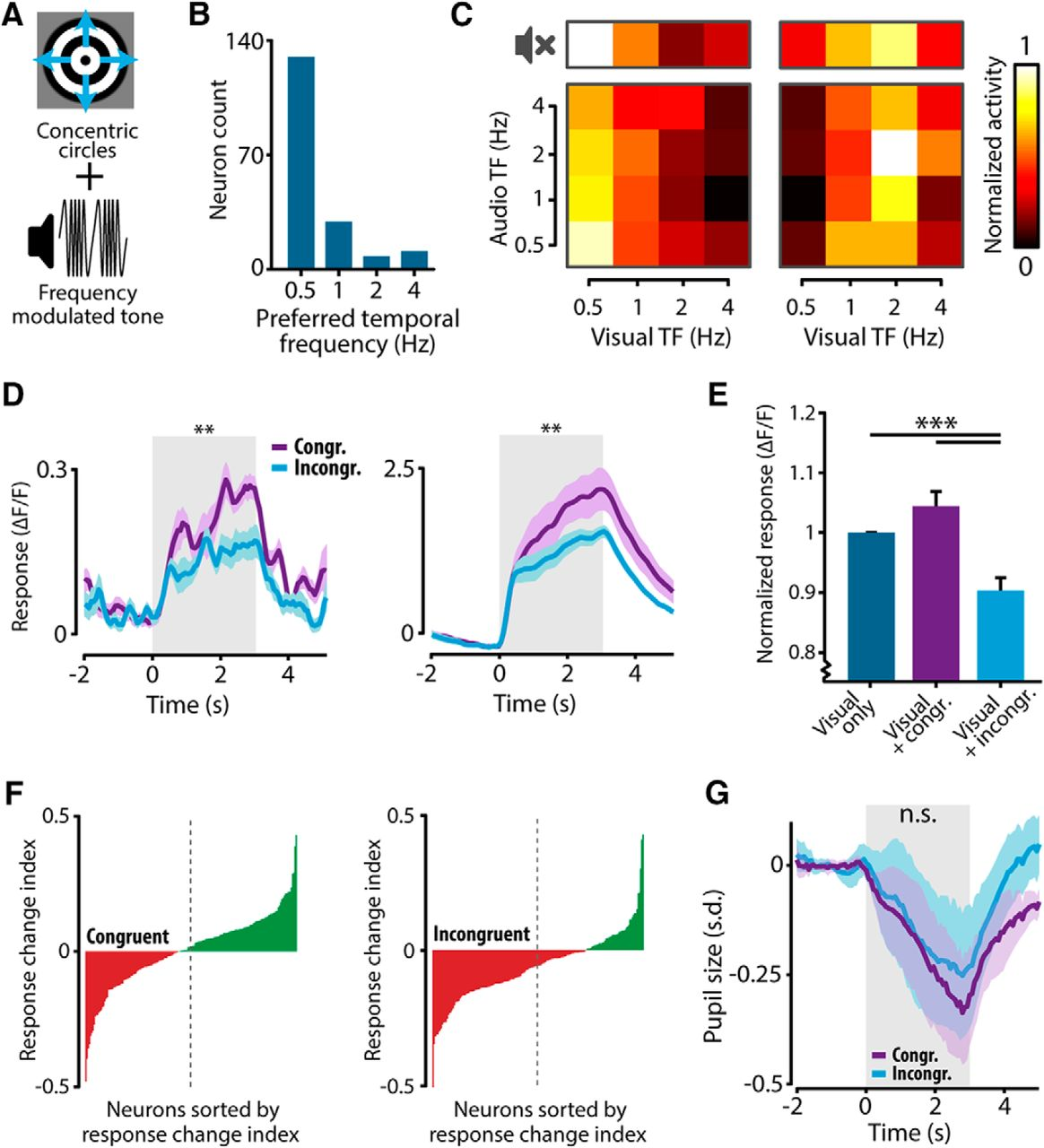 Audiovisual Modulation in Mouse Primary Visual Cortex Depends on