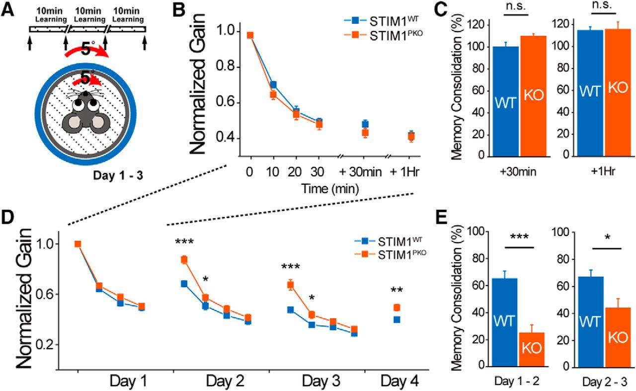STIM1 Regulates Somatic Ca2+ Signals and Intrinsic Firing