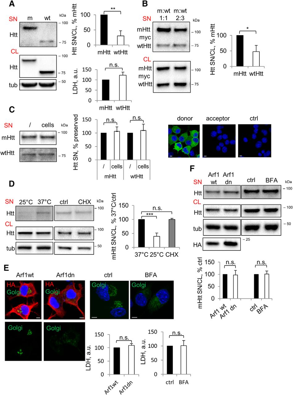Mutant Huntingtin Is Secreted Via A Late Endosomal Lysosomal