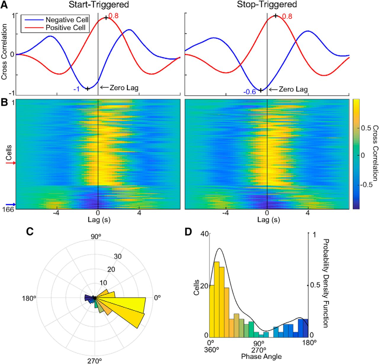 Dedicated Hippocampal Inhibitory Networks for Locomotion and ...