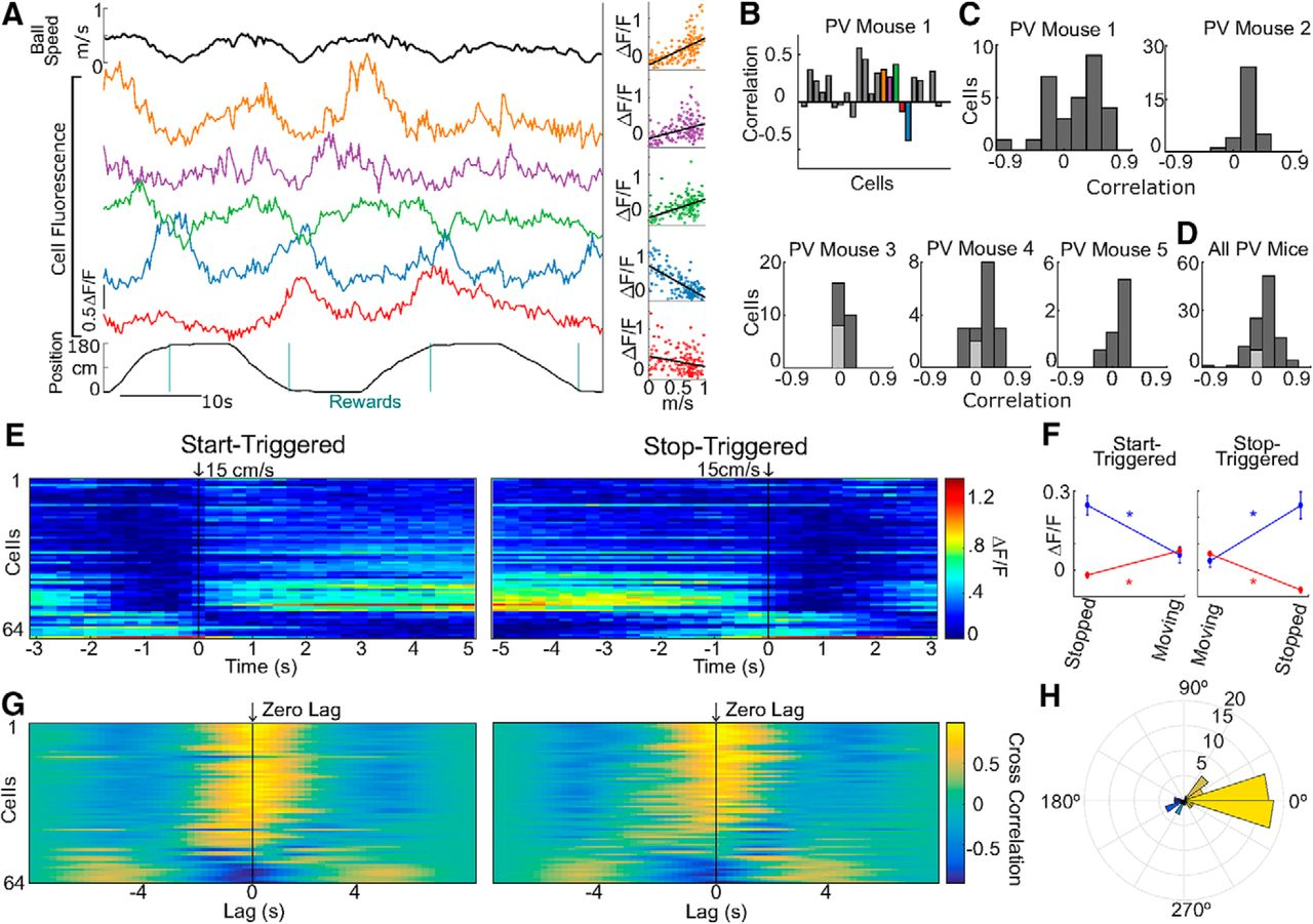 Dedicated Hippocampal Inhibitory Networks For Locomotion And Samsung Sl 150 Wiring Diagram Download Figure