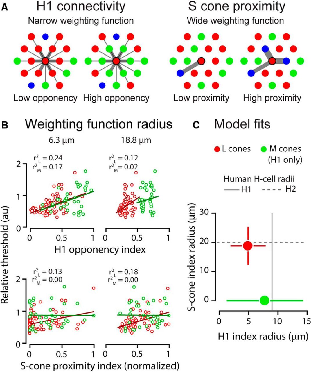 Spatiochromatic Interactions between Individual Cone