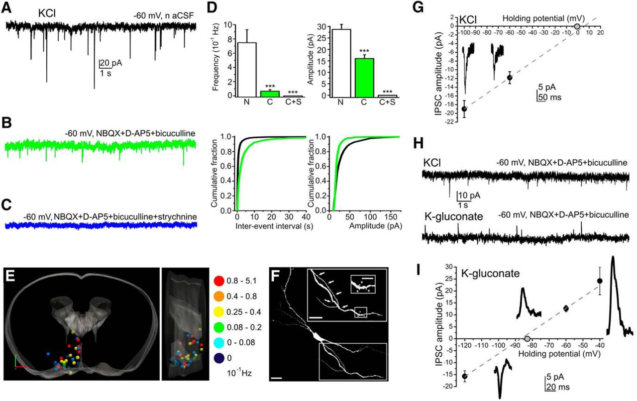 Glycinergic Input to the Mouse Basal Forebrain Cholinergic Neurons ...
