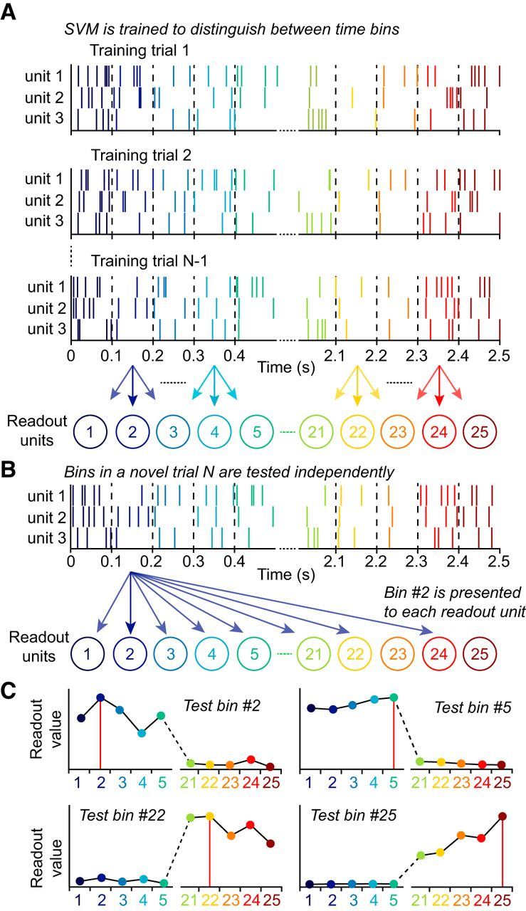 Differential Encoding of Time by Prefrontal and Striatal Network