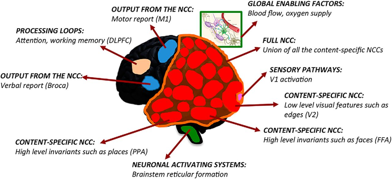 neural activation theory psychology