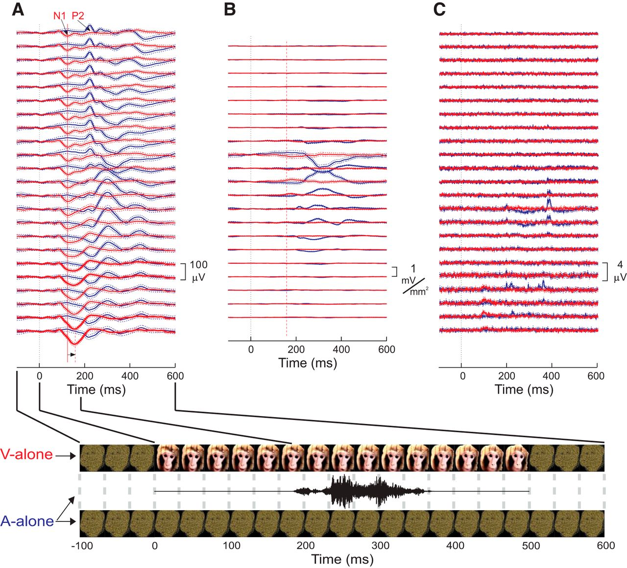 Primary Generators Of Visually Evoked Field Potentials Recorded In Audio Gt Filters 1000 1 Tuning Voltage Controlled Filter Download Figure
