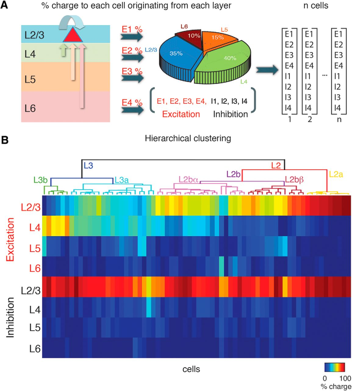 Sublaminar Subdivision of Mouse Auditory Cortex Layer 2/3