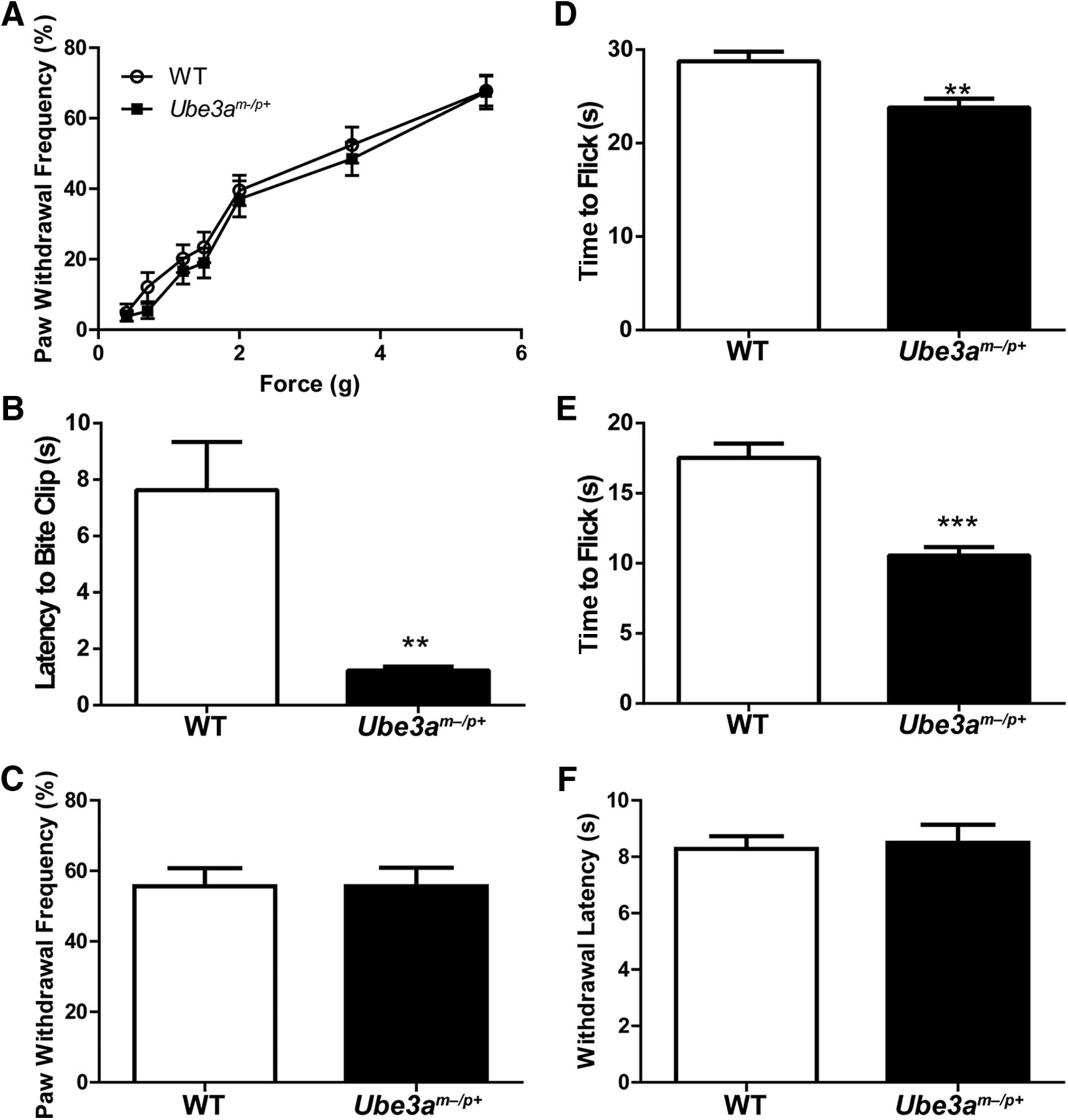 Enhanced Nociception in Angelman Syndrome Model Mice
