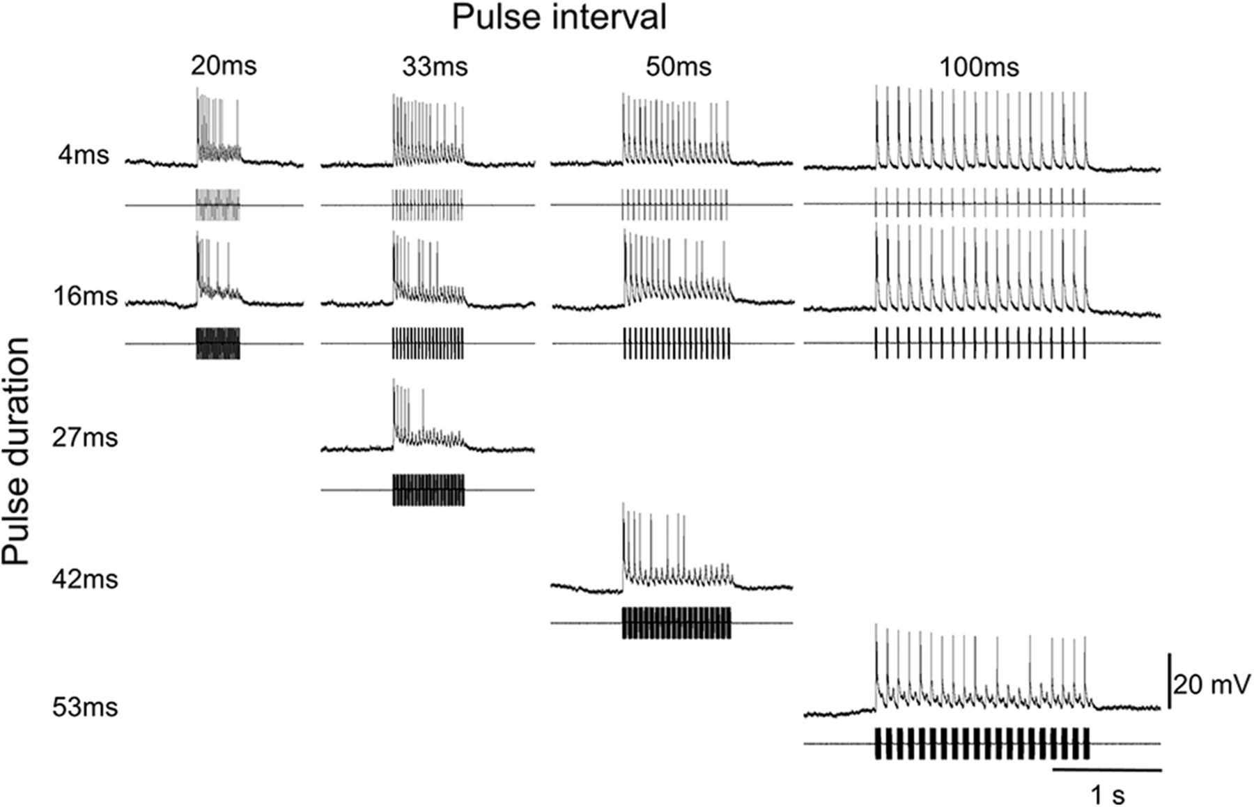 Interneurons in the Honeybee Primary Auditory Center