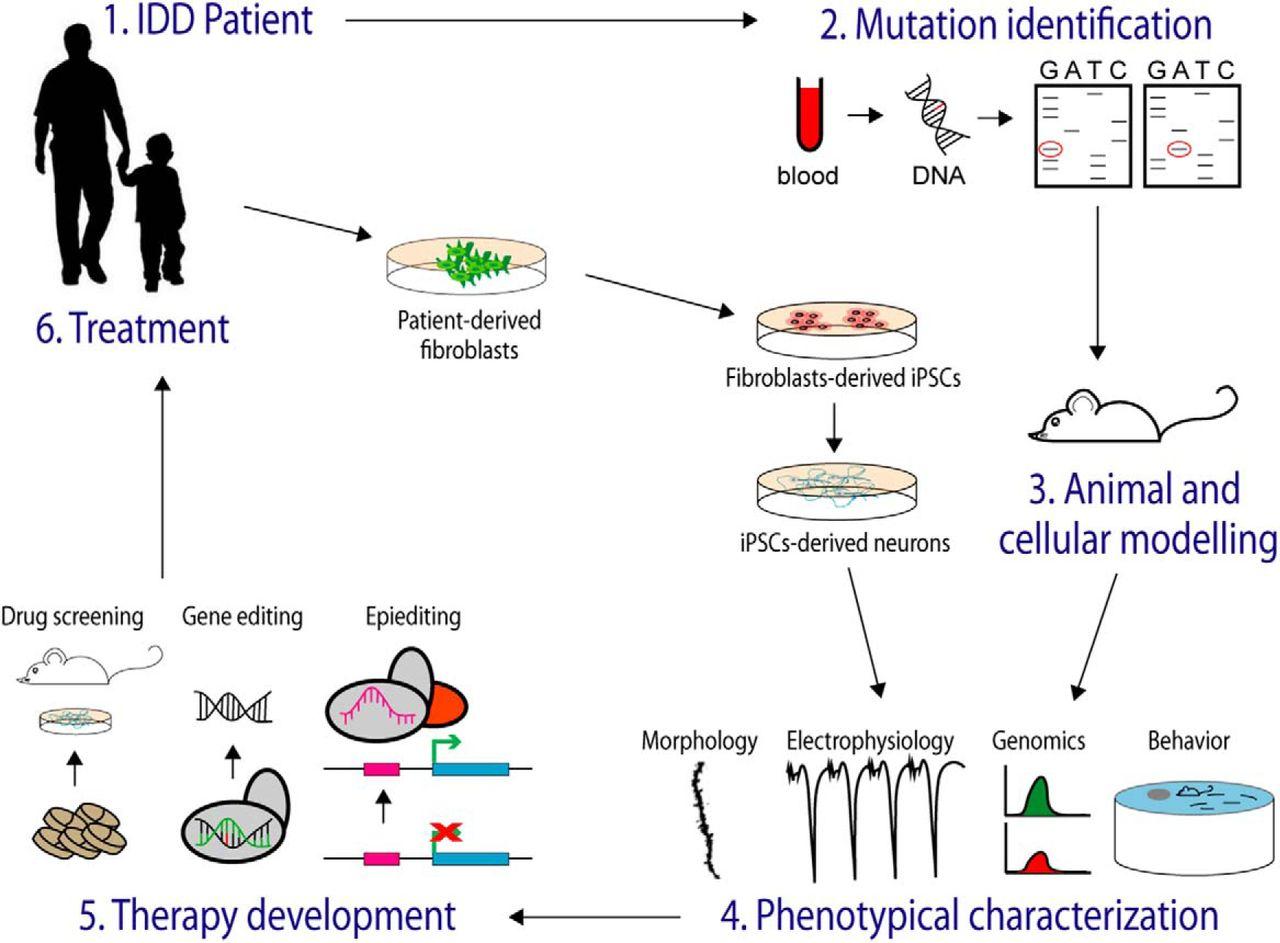Epigenetic Etiology of Intellectual Disability | Journal of Neuroscience