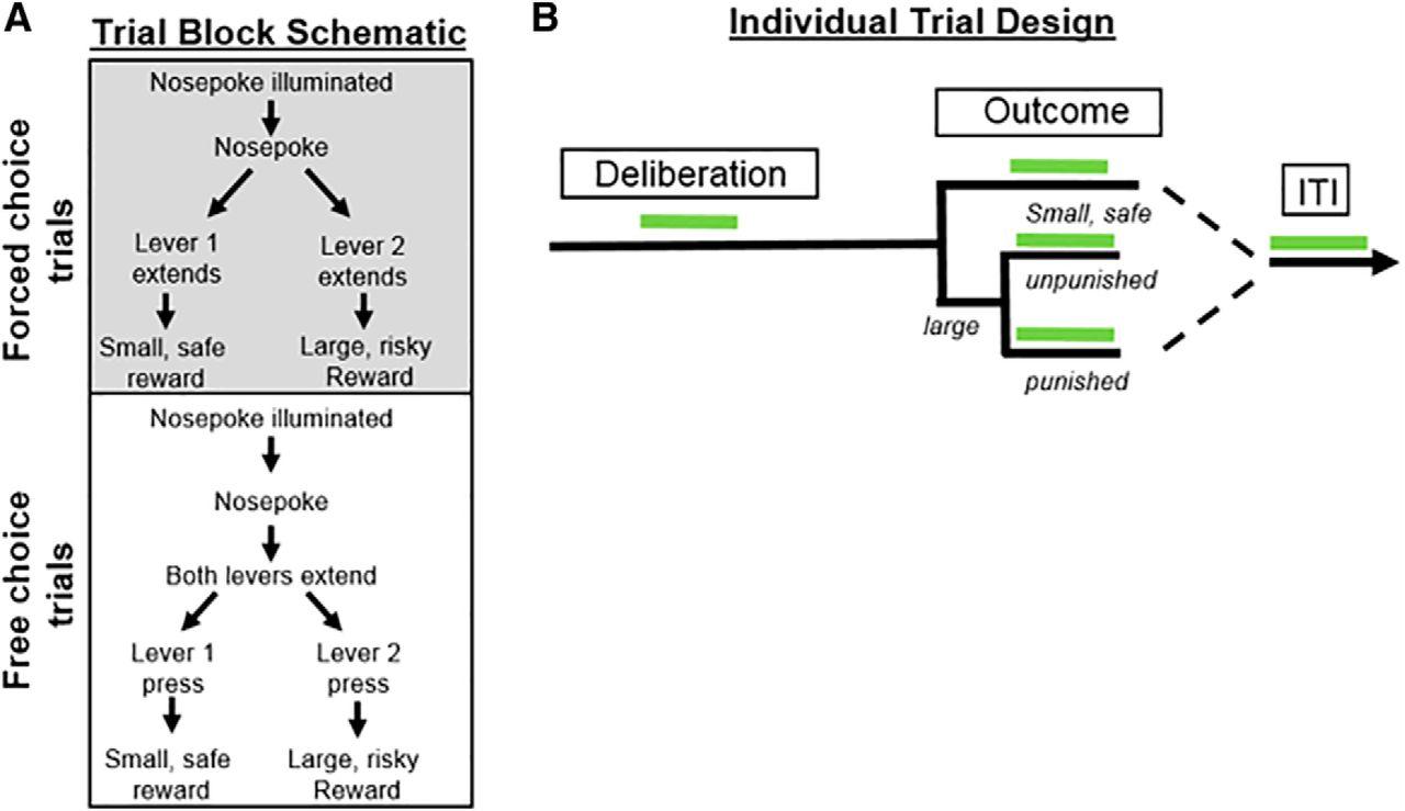 Optogenetic Inhibition Reveals Distinct Roles For Basolateral G 722 Block Diagram Download Figure