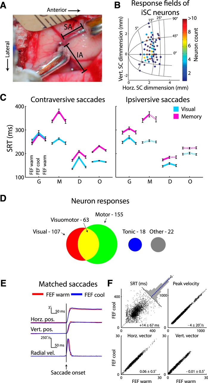 Frontal eye field inactivation diminishes superior colliculus download figure ccuart Choice Image