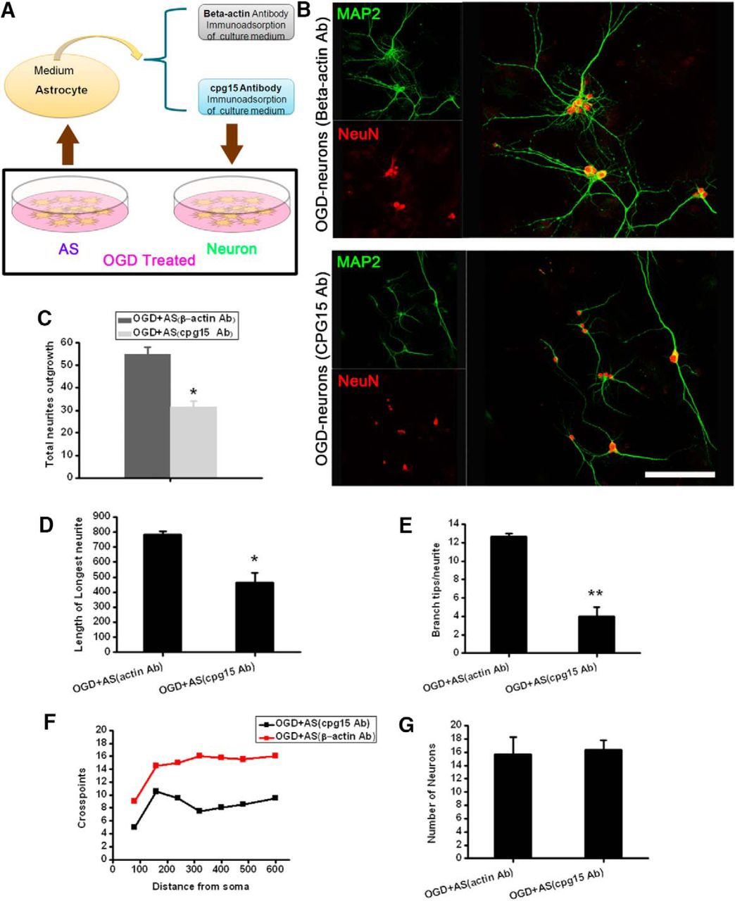Soluble Cpg15 From Astrocytes Ameliorates Neurite Outgrowth Recovery Takeuchi Wiring Diagram Download Figure