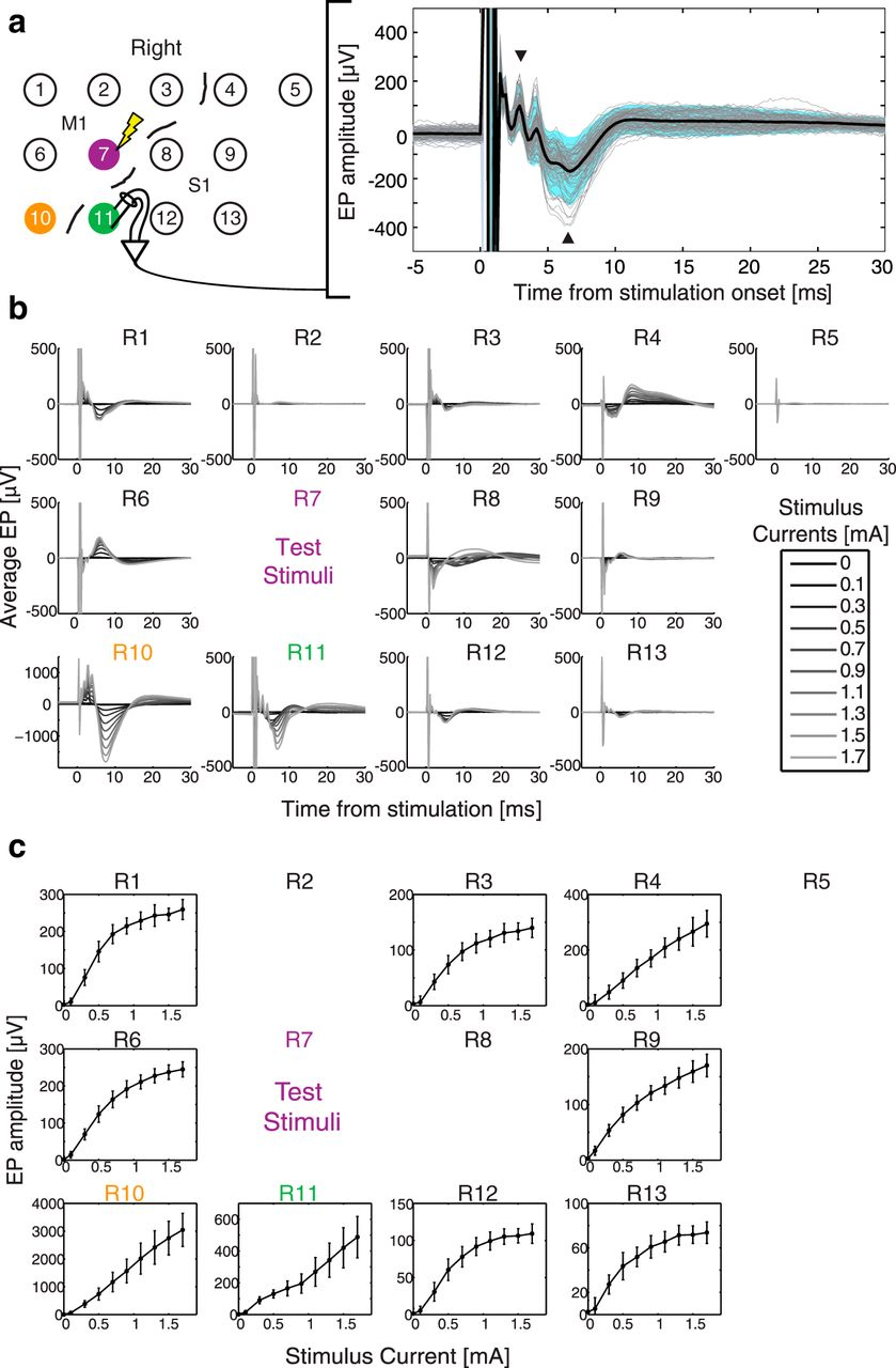 Paired Stimulation For Spike Timing Dependent Plasticity In Primate Wiring Diagram Steven Ma Download Figure