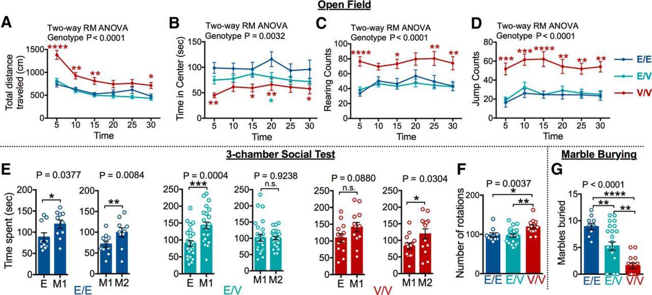 A Novel Human CAMK2A Mutation Disrupts Dendritic Morphology