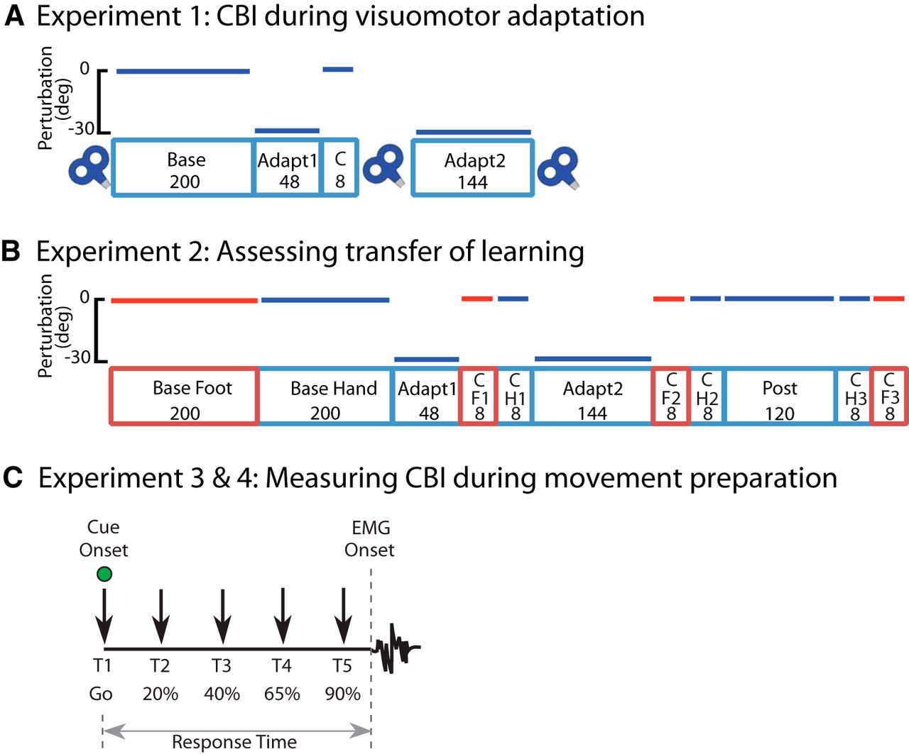 Cerebellar–M1 Connectivity Changes Associated with Motor Learning