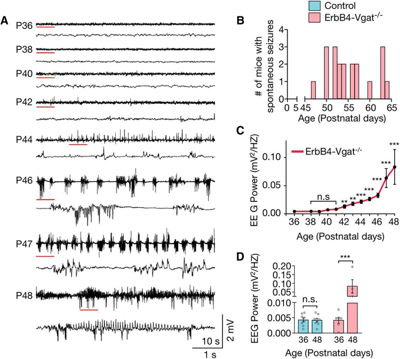 Regulation of Synapse Development by Vgat Deletion from ErbB4