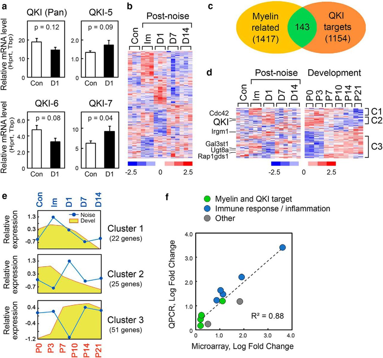 Noise-Induced Dysregulation of Quaking RNA Binding Proteins