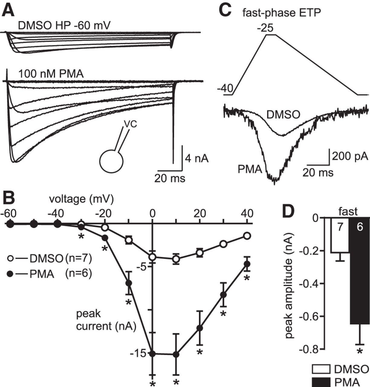 Protein Kinase C Enhances Electrical Synaptic Transmission