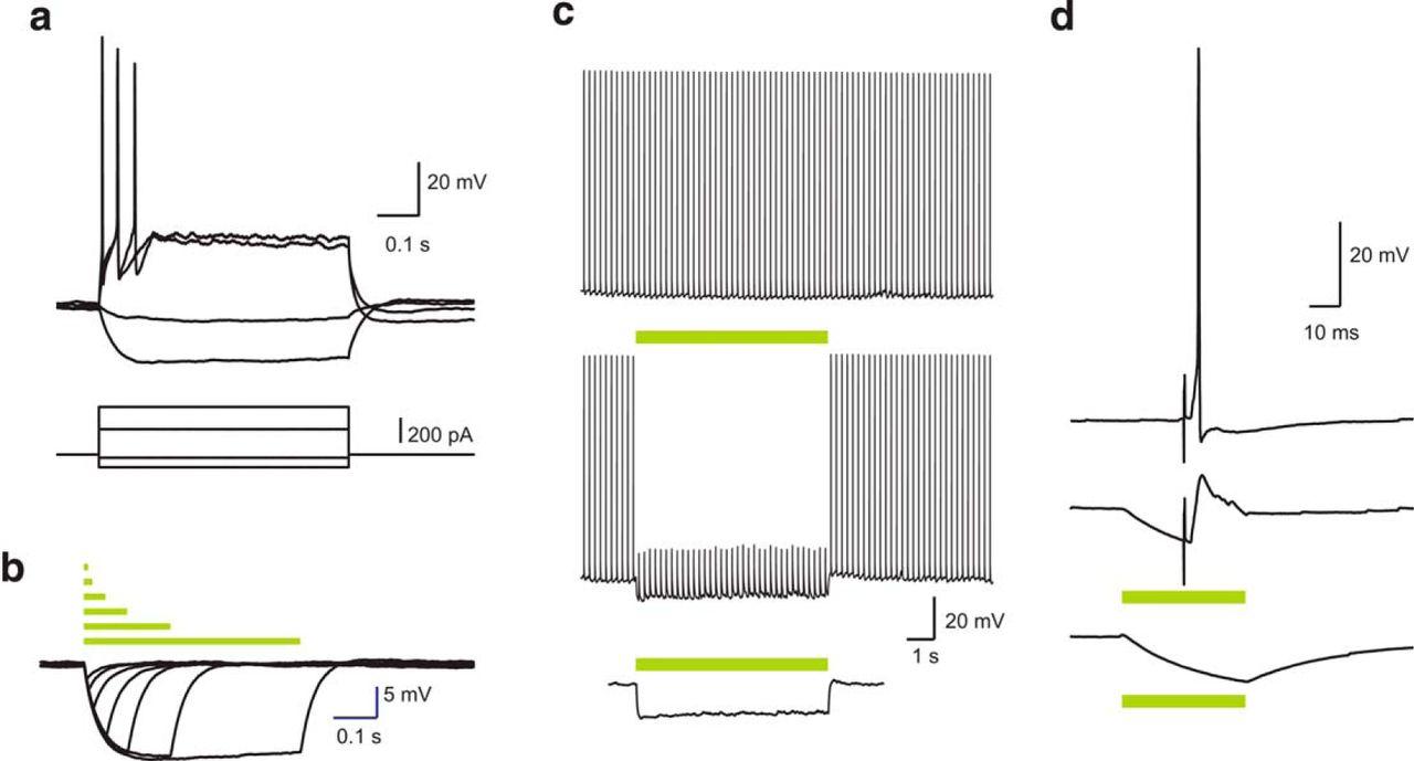 Basolateral Amygdala Neurons Maintain Aversive Emotional Salience Cube Hopper Mk2 Wiring Diagram Download Figure