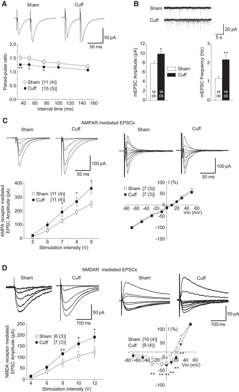 Hyperactivity Of Anterior Cingulate Cortex Areas 24a 24b Drives