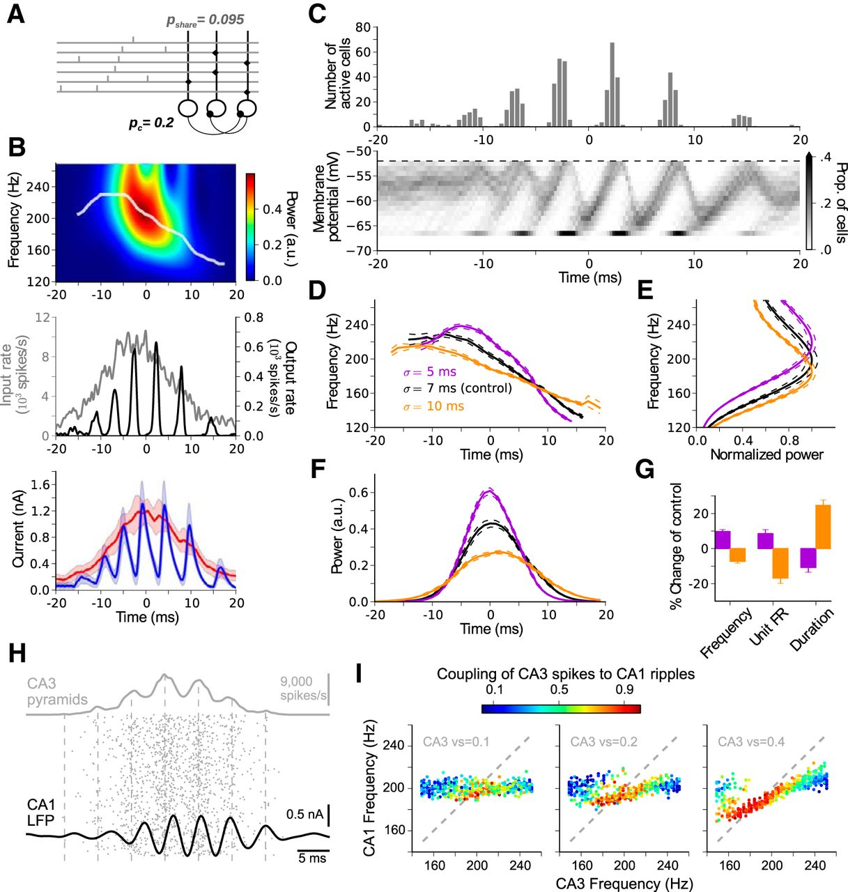 Hippocampal Ripple Oscillations and Inhibition-First Network