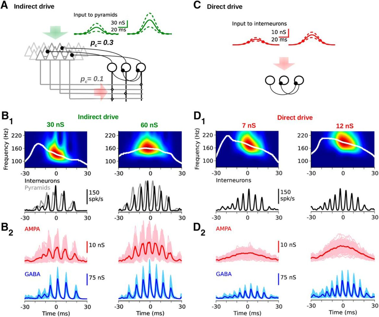 Hippocampal Ripple Oscillations And Inhibition First Network Models For The Circuit Also Determine Frequency Of Download Figure Open In New Tab
