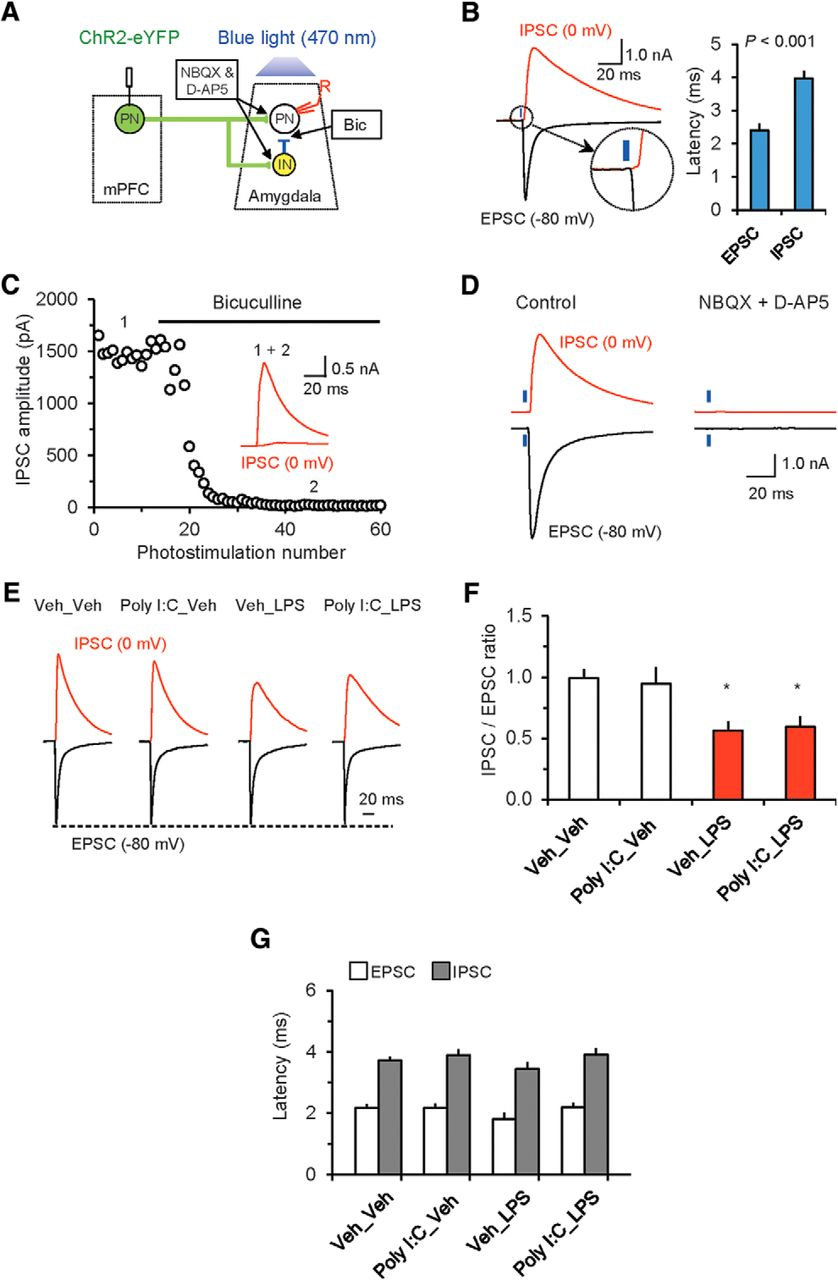 Maternal And Early Postnatal Immune Activation Produce Dissociable
