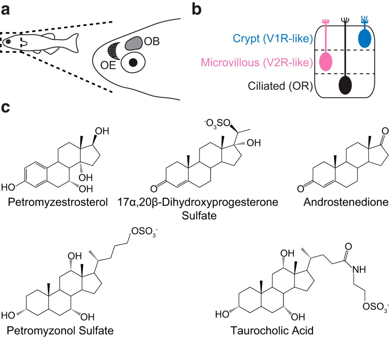 Excreted Steroids in Vertebrate Social Communication