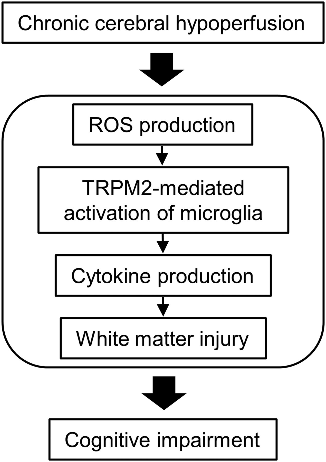 TRPM2 Channel Aggravates CNS Inflammation and Cognitive Impairment