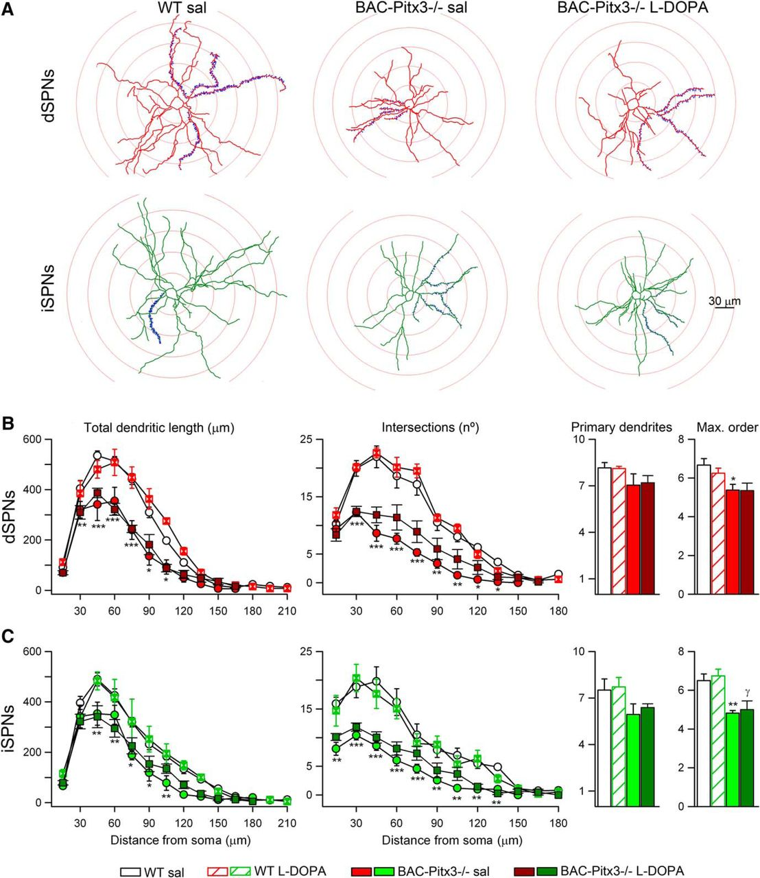 Differential Synaptic Remodeling By Dopamine In Direct And Indirect Found A Basic Wiring Diagram Please Note That 90 Of My Camping Download Figure