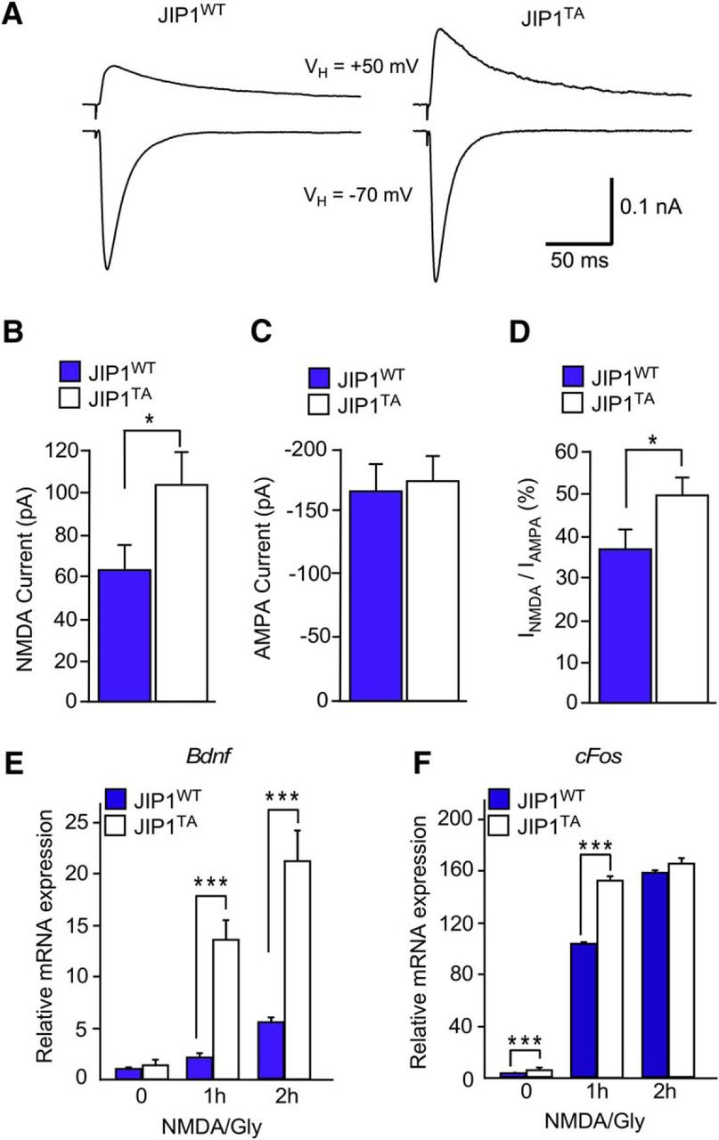 JIP1-Mediated JNK Activation Negatively Regulates Synaptic
