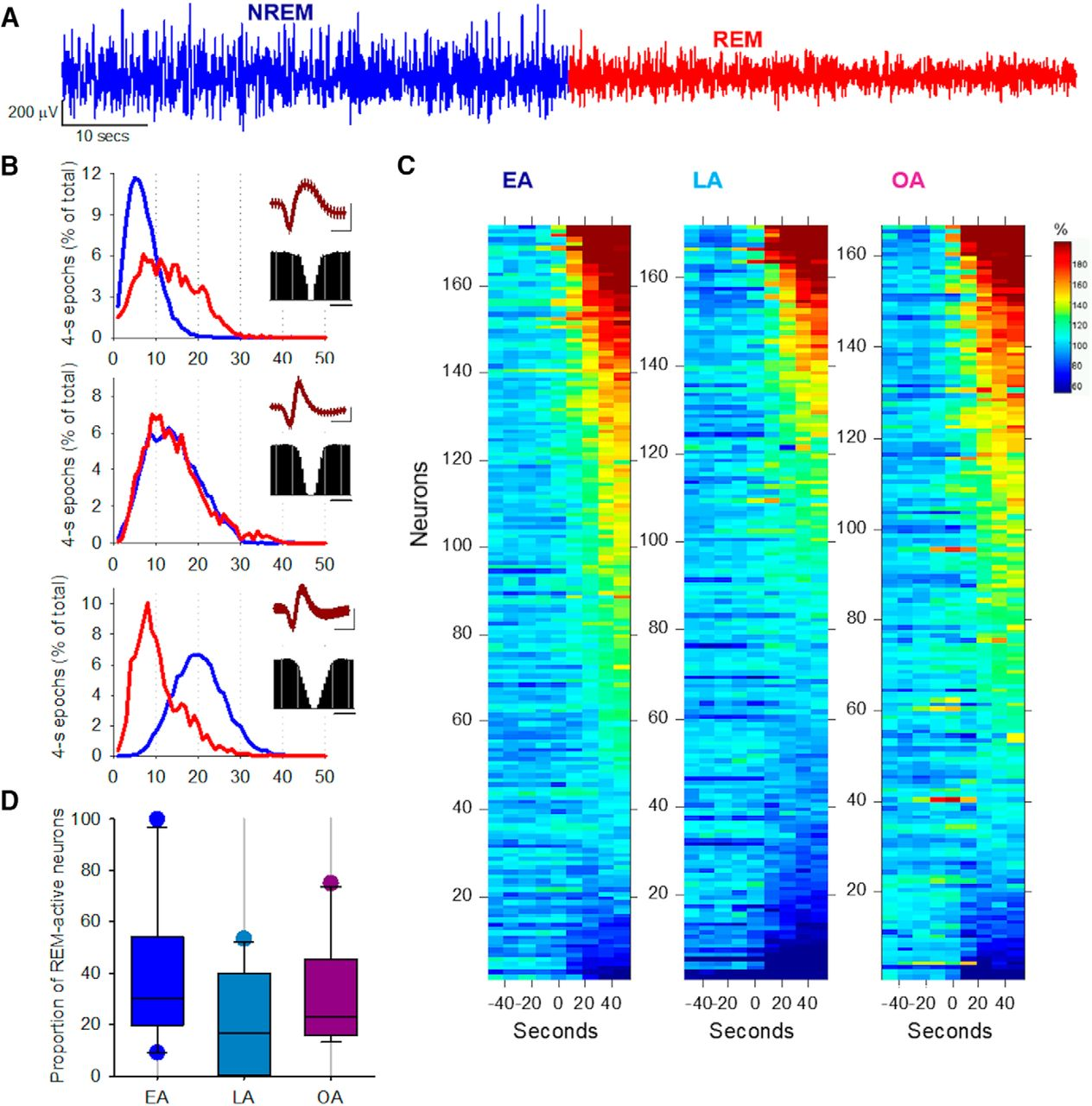 Effects of Aging on Cortical Neural Dynamics and Local Sleep ...