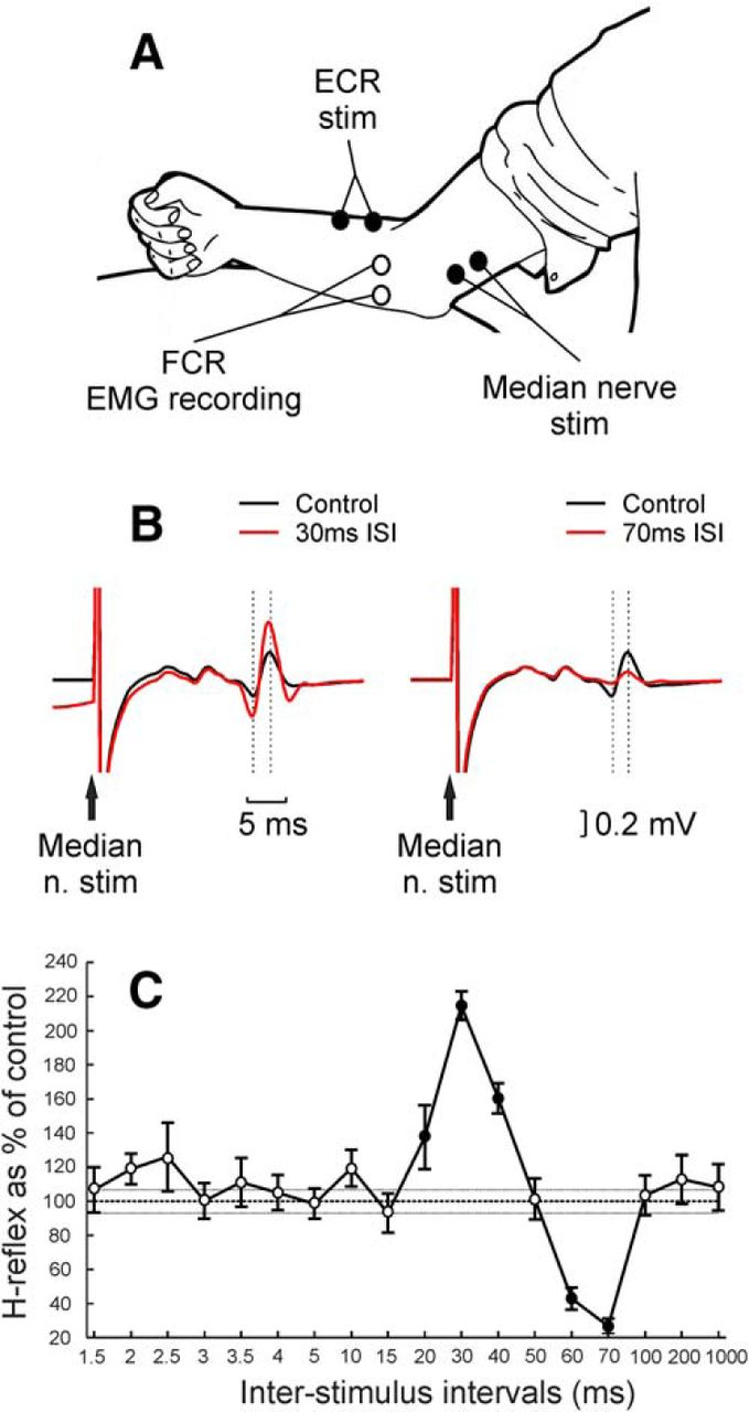 Convergent Spinal Circuits Facilitating Human Wrist Flexors Figure 5 Schematic Diagram Of The Electromyography Emg Detecting Download